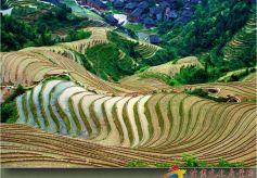 姜萍摄影作品欣赏:峡江孤舟、龙胜梯田
