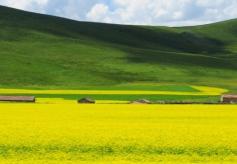 甘南美仁大草原 青藏高原特有高山草甸草原地貌