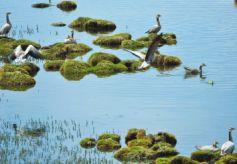 甘肃盐池湾国家级自然保护区风景宜人