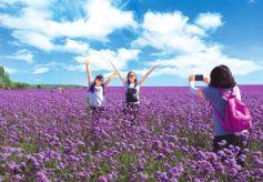 金昌市大力发展香草花卉文化旅游产业