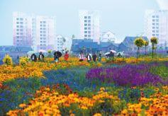 金昌市紫金花海雨中美景
