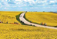 游客在民乐县扁都口生态休闲旅游区观花赏景
