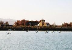 酒泉肃北水上公园天鹅流连无意南飞 吸引众多摄影爱好者