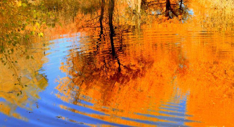 甘肅金塔胡楊林  邂逅如詩如畫的秋天
