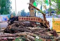 """金昌沙枣林湿地自驾游露营地 入选""""国家队"""""""