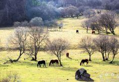 天水关山牧场:初冬的景色美翻了!