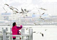 甘肃永靖县黄河三峡湿地候鸟翔集