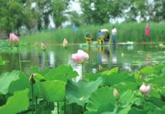 兰州市榆中县依托区位优势 打造西北花卉休闲旅游胜地