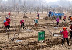 临夏州临夏县着力打造多样化观光农业产业链