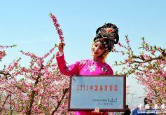 甘肃天水主景桃园姹紫嫣红迎八方游客