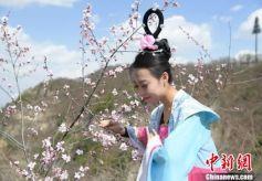 甘肃崆峒四月人面桃花相映红
