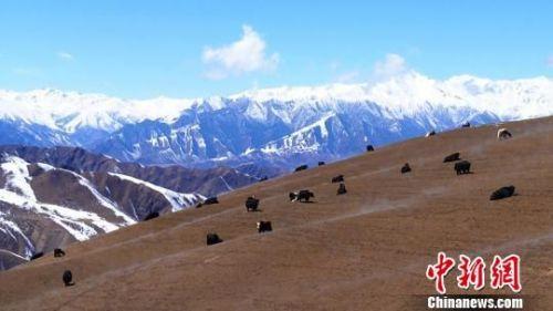 图为祁连山雪景。 武雪峰 摄