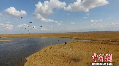 图为候鸟在老师兔管护站湿地上空翱翔。 徐磊 摄