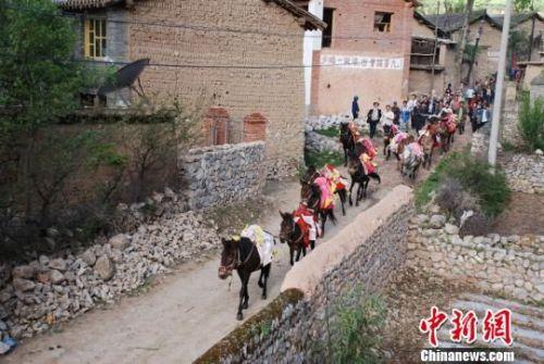 活动期间,坪定乡炮鸣马嘶、锣鼓喧天,独特的民俗风情形成了甘肃藏乡特有的民俗文化。当地每年都会对比赛获得前三名的骏马及主人进行表彰奖励,马儿披红挂绿、头戴红花,甚是英武。 汪江海 摄