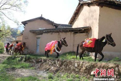 """图为""""跑马节""""民俗活动。 汪江海 摄"""