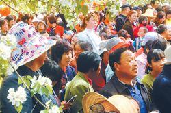 第二届高原梨花旅游节在甘肃临夏和政县开幕