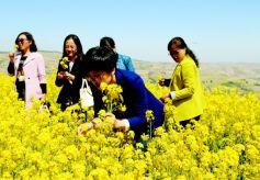 第一届甘肃·会宁油菜花文化旅游节开幕