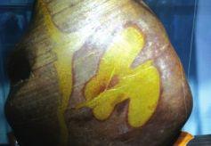 甘肃兰州一奇石爱好者收藏黄河奇石600余方