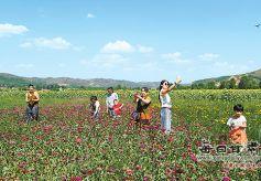 甘肃华亭:乡村旅游发展态势良好