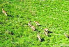 公司靖远县哈思山自然保护区内野生岩羊