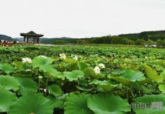 全国网媒记者走进甘肃西和晚霞湖 赏荷花、品民俗