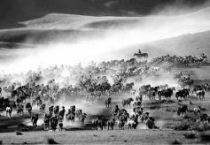 【绚丽甘肃】一部皇家马场的变迁史——山丹军马场