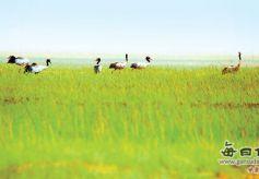 甘肃阿克塞海子湿地草原秋日美景