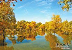 中国·甘肃酒泉航天金塔第八届胡杨文化旅游节启幕