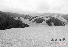甘肃张掖肃南: 洒落在祁连山侧的金色牧场