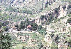 甘肃庆城县发现较大古树群落 距今约有210年