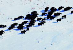 甘肃酒泉:哈尔腾草原成了野生动物的家园