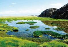 甘肃省酒泉:盐池湾的生态综合保护之路