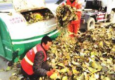 甘肃省兰州市七里河区环卫局全力做好冬季落叶清扫工作