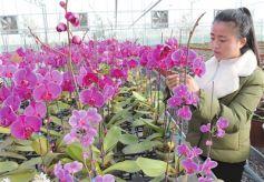 甘肃临夏国家农业科技园区在智能温室内培育花卉