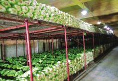 甘肃省兰州:万吨冬春储备菜收储到位啦