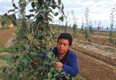 甘肃小伙从白领到果农辞去世界500强工作回乡创建果园