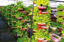 物联网让农业智慧运营 兰州榆中县粮食总产量稳定上升