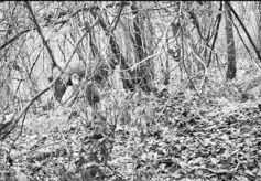 甘肃连城自然保护区首次拍到野生梅花鹿实体影像