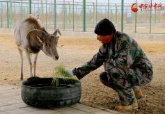 甘肃阿克塞:成为野生动物的自由栖息地