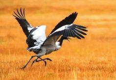 野生动物频繁出现 甘肃肃南生态好转