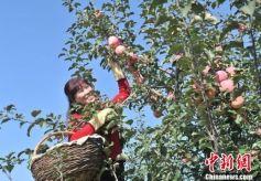 甘肃精准到户施策 培育六大特色农业产业助脱贫