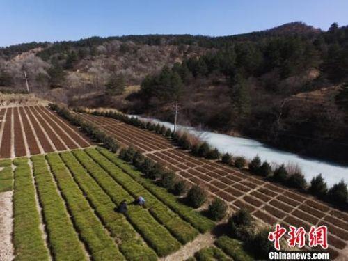 图为林木育苗员张小峰管护的大片露天苗圃地,对面林区就是靠产自这里的苗木绿起来的。 杨艳敏 摄