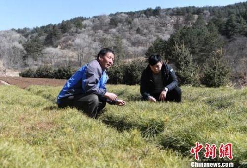 3月上旬,林木育苗员张小峰(左)和他的儿子张旭忙碌在露天苗圃地里。 杨艳敏 摄