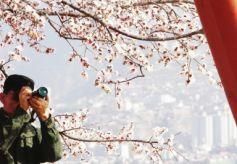 三月甘肃兰州踏青赏花正当时
