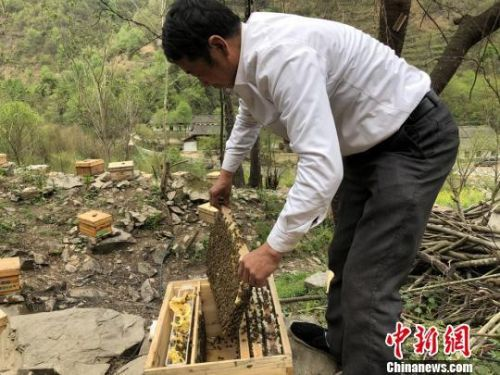 图为养蜂人查看蜂箱。 徐雪 /摄
