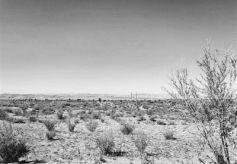 """甘肃父子两代艰辛付出8000亩沙漠变""""绿洲"""""""