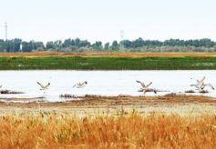 美丽甘肃北海子,一片正在苏醒的湿地