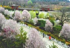 甘肃灵台县古灵台被称为古神州祭天第一台