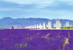 中国·金昌第六届骊靬文化旅游节将助推镍都旅游