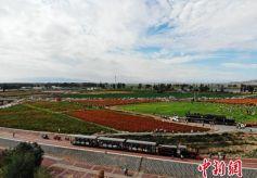 """甘肃丝路小城山丹开通""""旅游火车""""穿越戈壁花海"""